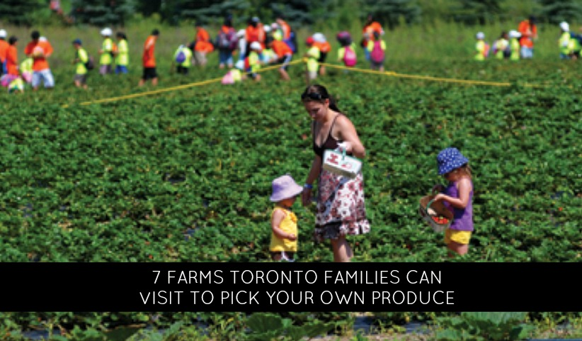 7 Farms Toronto Families Can Visit This Summer to Pick Your Own Produce