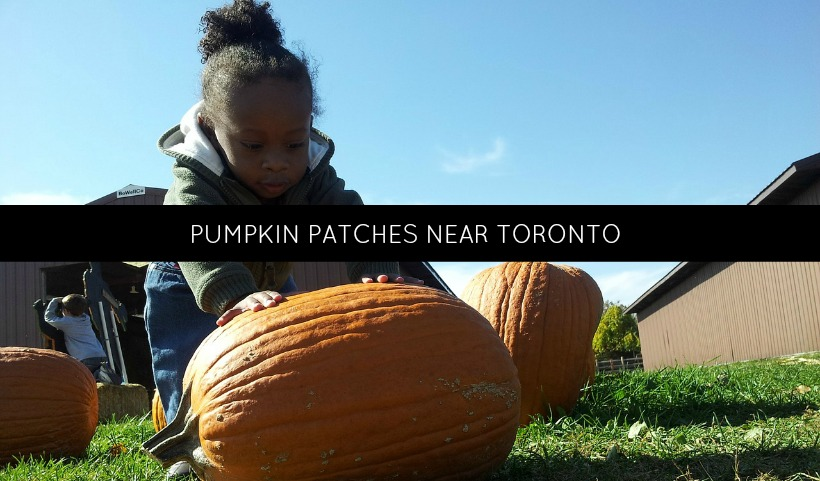 Pumpkin Patches Near Toronto